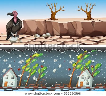 Iki kuraklık ağaç manzara sokak arka plan Stok fotoğraf © bluering