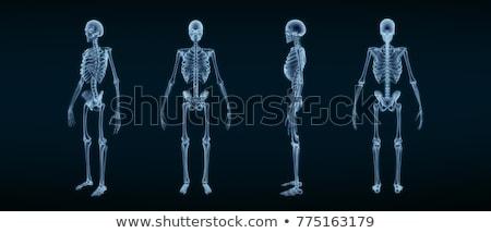 3D · renderelt · kép · csontváz · test · tudomány · grafikus - stock fotó © maya2008