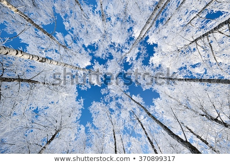 Cold winter day, beautiful hoarfrost and rime on trees Stock photo © vlad_star