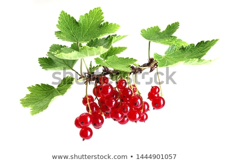 Sprig of red currants Stock photo © Digifoodstock