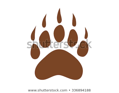 bear footprint grizzly paw print vector stock photo © andrei_