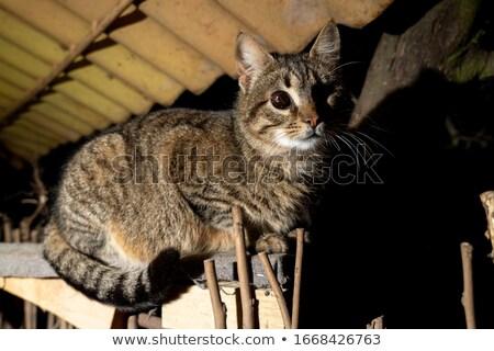 Macska portré fél vak házimacska bent Stock fotó © simply