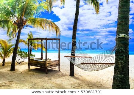 Сток-фото: расслабляющая · тропические · праздников · гамак · пальма · отпуск