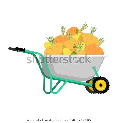 Wheelbarrow and turnip. vegetables in garden trolley. big harves Stock photo © popaukropa