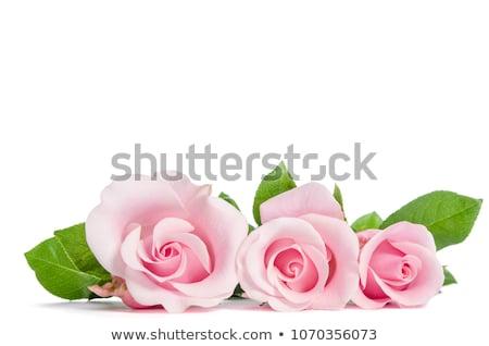 üç gül beyaz romantizm kimse Stok fotoğraf © IS2