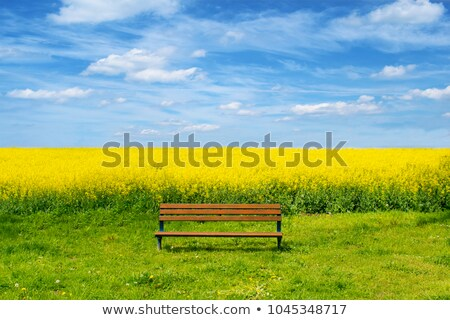 Trees near rape field.  Stock photo © Massonforstock