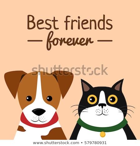 Veterinário animal de estimação gato cão desenho animado Foto stock © Krisdog