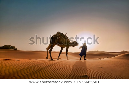 Deve çöl gece örnek arka plan seyahat Stok fotoğraf © bluering