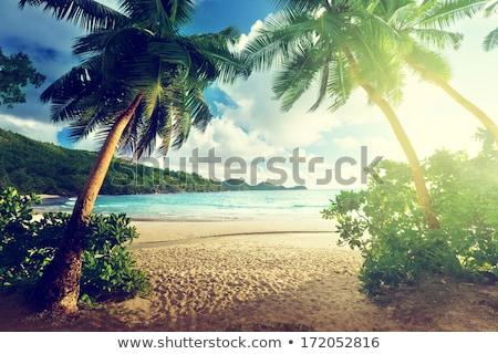 Zöld trópusi sziget Thaiföld trópusi vakáció ünnepek Stock fotó © dmitry_rukhlenko