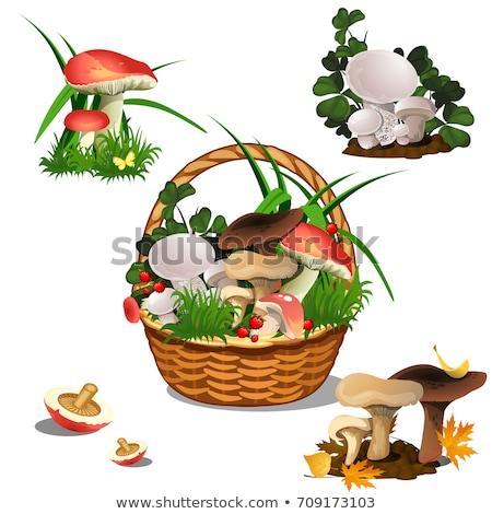 Kosár gombák izolált fehér szett vág Stock fotó © Lady-Luck