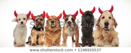 6 adorable devil dogs celebrating halloween Stock photo © feedough