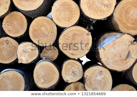 Deforestation scenes with lumber jacks Stock photo © colematt