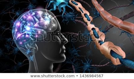 multiple sclerosis damaged myelin stock photo © lightsource