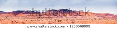 центральный Австралия мягкой утра свет Сток-фото © lovleah