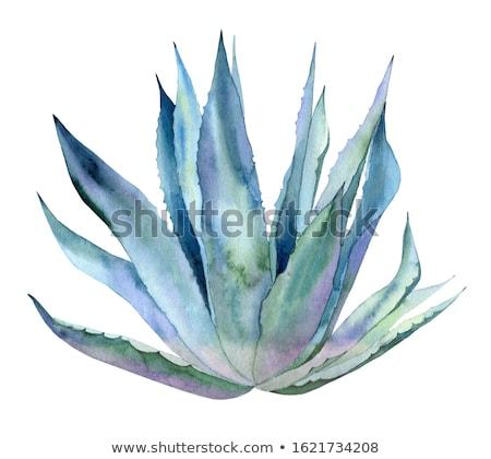 подробность agave завода природы лист Сток-фото © boggy