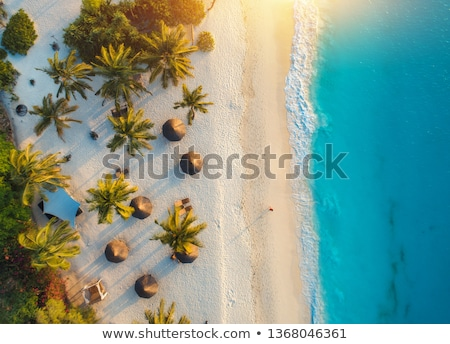 Aerial view of umbrellas, palms on the sandy beach of ocean Stock photo © denbelitsky