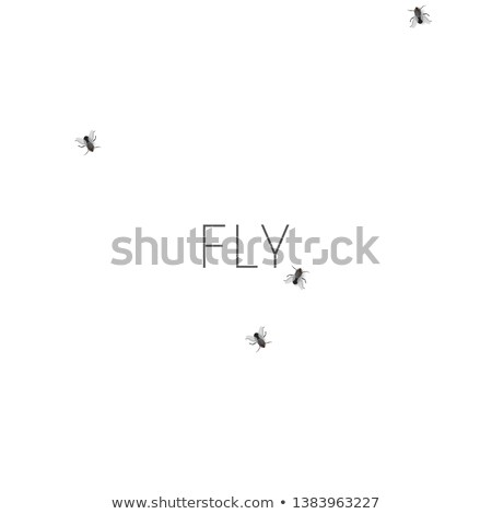 Pattern with crawling houseflies Stock photo © biv