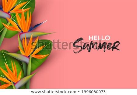 Hello Summer pink card of 3d paradise bird flower Stock photo © cienpies