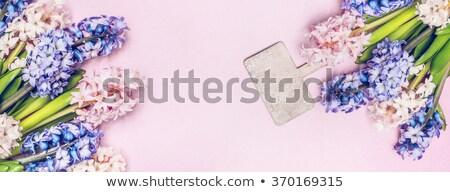 Beautiful pink hyacinth flower over white Stock photo © Melnyk