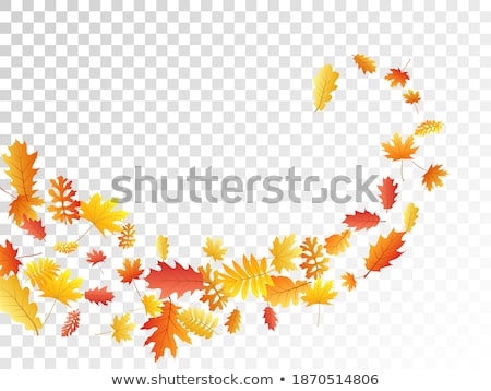 Autumn leaves scattered background. Oak, maple and rowan Stock photo © SwillSkill