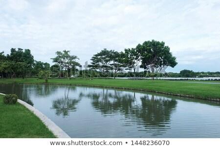 natureza · floresta · parque · mulher · flores · caminhada - foto stock © robuart