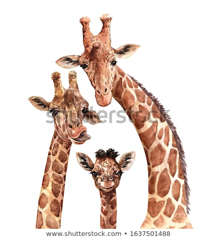 Ilustrare girafă pădure apus semna desen animat Imagine de stoc © adrenalina