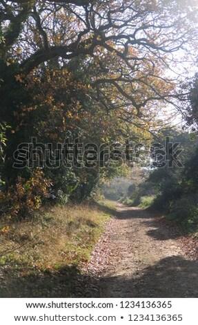 vidék · sáv · napfelkelte · Yorkshire · égbolt · fa - stock fotó © suerob