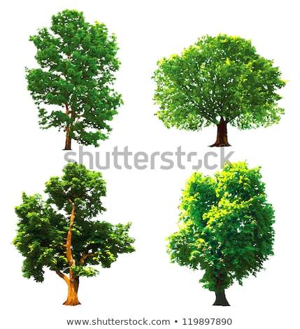 grand · arbre · silhouette · feuille · art · usine - photo stock © colematt