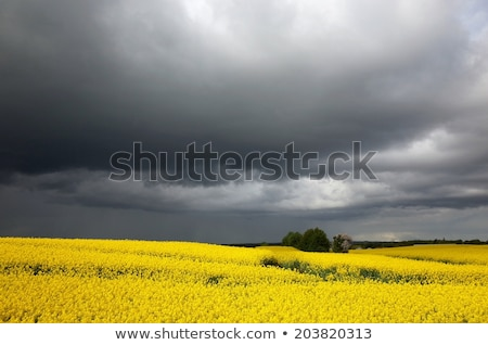 Escuro nuvens Dinamarca Foto stock © Klinker