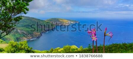 berg · Portugal · eiland · gras · natuur - stockfoto © capturelight