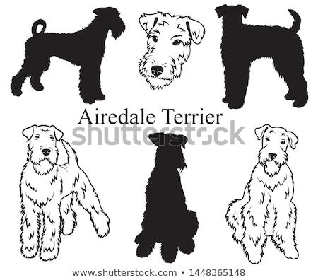 Bingley Terrier Head Drawing Stock photo © patrimonio