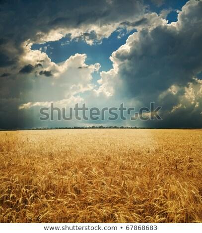 Colheita ensolarado céu nuvens luz fundo Foto stock © mycola