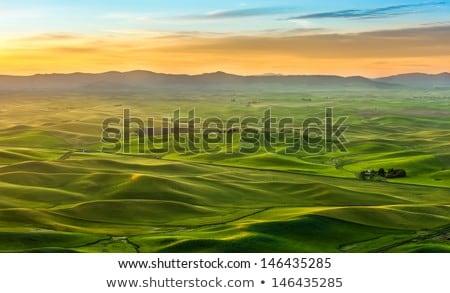 Rolling Hills Palouse Region Washington State Farmland  Stock photo © cboswell