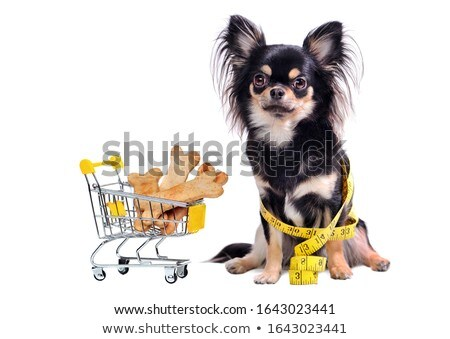 chihuahua and trolley Stock photo © cynoclub