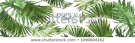 バナー 熱帯 葉 勾配 花 ストックフォト © cammep