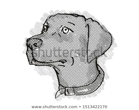 Retriever hondenras cartoon retro tekening stijl Stockfoto © patrimonio