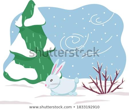 Zając królik stoją zimą lasu Zdjęcia stock © robuart
