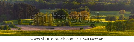 Stock photo: Meadow land.
