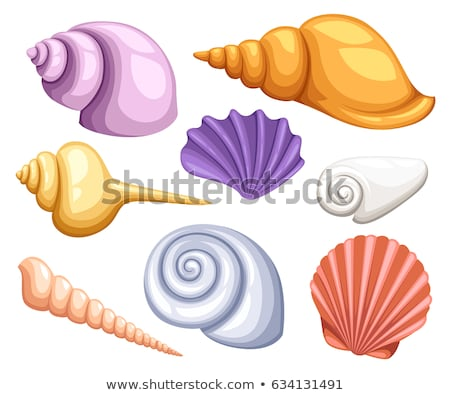 Frame of Conch Sea Shell Stock photo © zhekos
