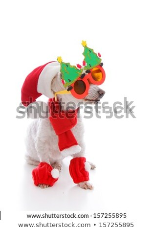 Happy dog at Christmas wearing comical glasses santa hat and cos Stock photo © lovleah