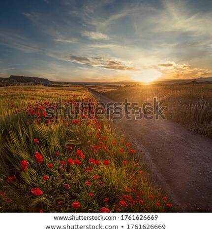 Cultivated Land Stock photo © gemenacom
