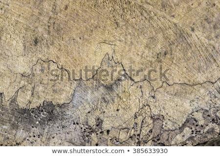 Eski ahşap kök harmonik yapı Stok fotoğraf © meinzahn
