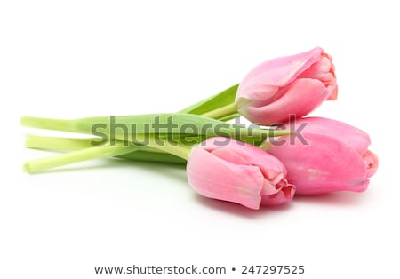 Bouquet of pink tulips isolated on white stock photo © Epitavi