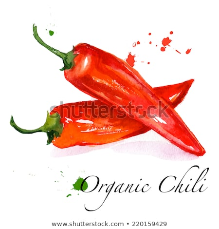 Rouge poivre couleur pour aquarelle illustration peinture cuisine Photo stock © ConceptCafe