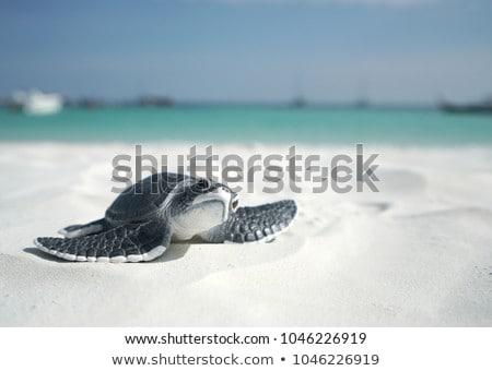 Klein zee schildpad kruipen omhoog hand Stockfoto © vapi