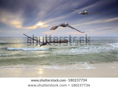 три · сидят · пирс · бирюзовый · морем · воды - Сток-фото © kaycee