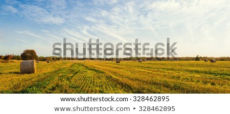 Farm mező felhők tájkép fák ősz Stock fotó © borysshevchuk