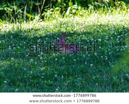 Güzel tavşan küçük beyaz parti portre Stok fotoğraf © taden