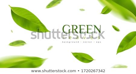 Verde primavera jardim quadro verão Foto stock © Suriyaphoto