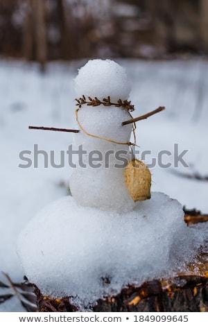 снега земле льда зима очистки Сток-фото © avq
